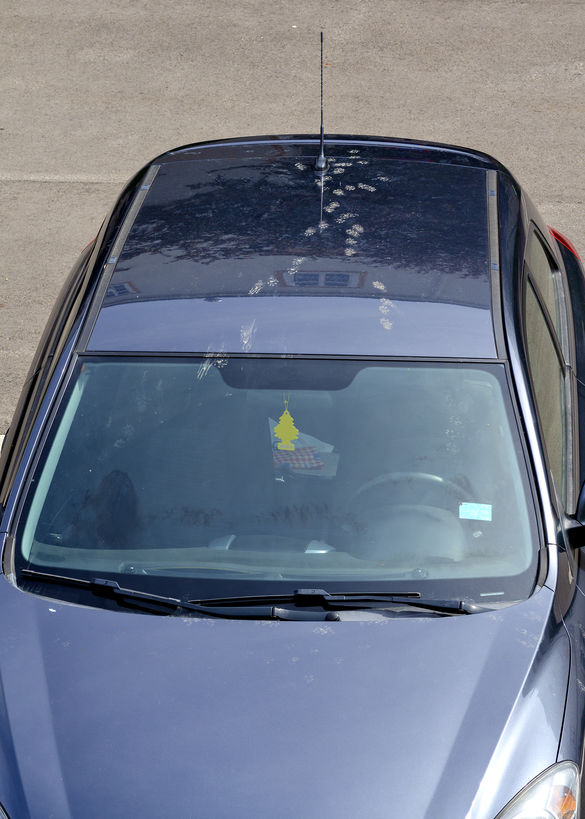 Marderschäden am Auto